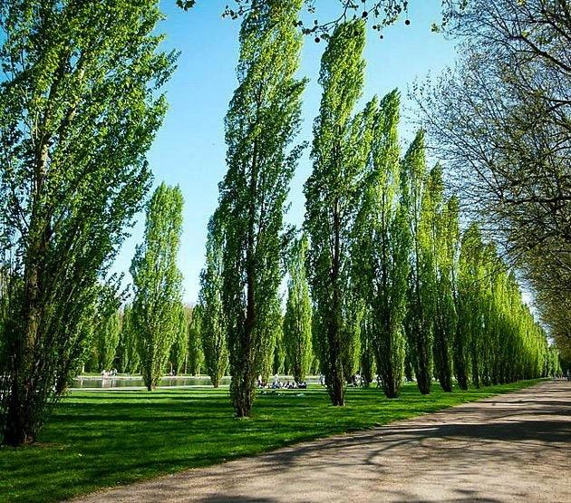 Emerald Ash Borer | A1 Tree Service, Calgary