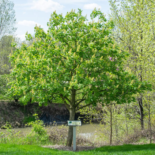 Tree services   Certified Arborists   Home   A1 Tree Service, Calgary