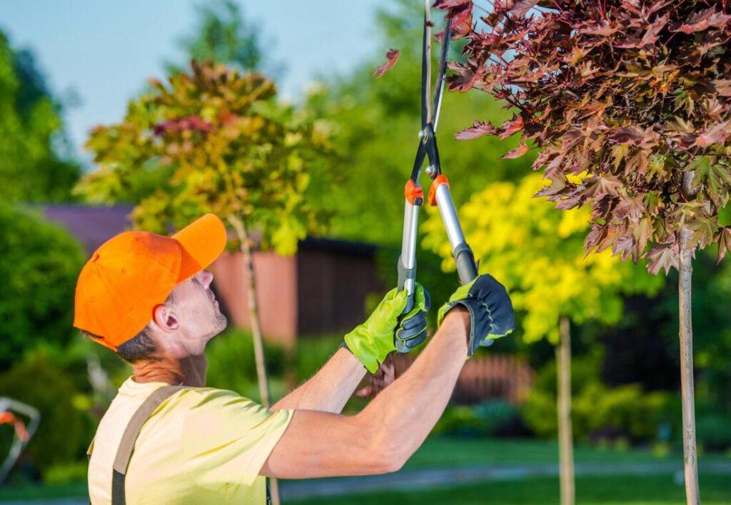 TREE PRUNING | Pruning | A1 Tree Service, Calgary