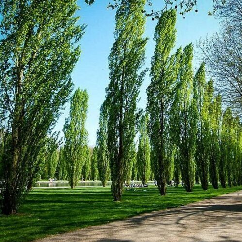 About Us   Isa Certified Arborist   A1 Tree Service, Calgary